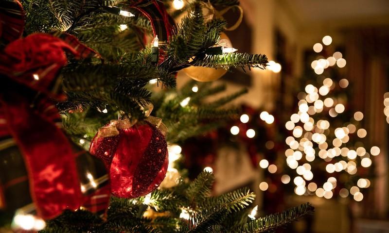 Kuidas jõulukuuse koju toomine keskkonnasäästlikult lahendada?