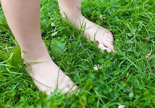 Pisikeste kõndijate pildientsüklopeedia: jalad