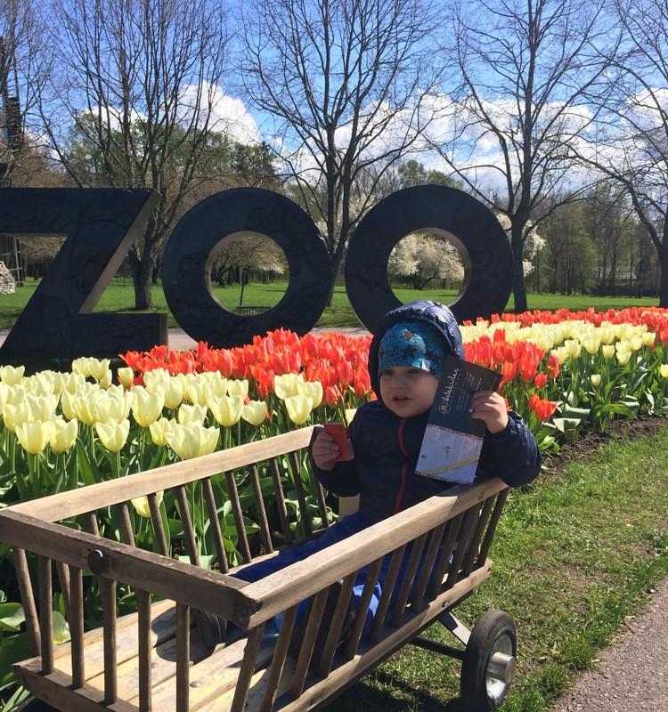 Beebi avastab kevadet: jalutuskäik loomaaias