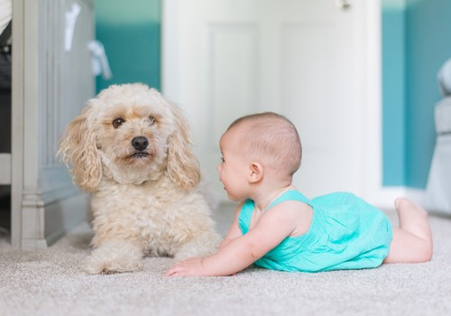 Mida rohkem on peres lemmikloomi, seda väiksem laste allergiarisk