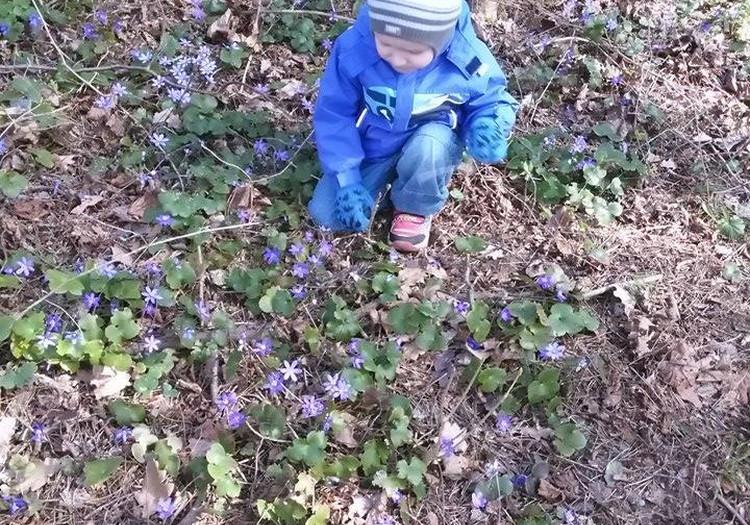 Beebi avastab loodust:  Esimesi sinililli korjamas