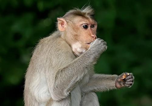 Südantmurdev pilt: ahviema hoiab süles oma surnud poega