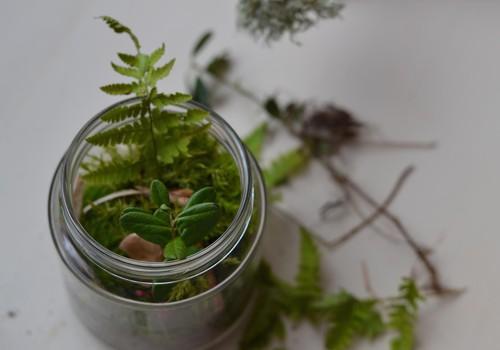 Meisterdame sügisest: terraarium- killuke metsa toas