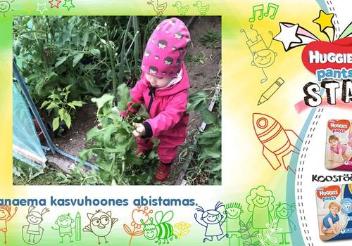 Esimesed aiatööd - tehtud!